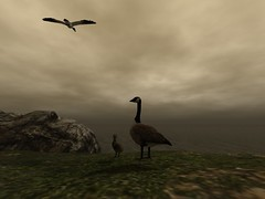 What do they see (sunshineacid@ymail.com) Tags: nature secondlife animal bird duck goose ocean sea