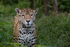 Tika 2 (fotodoc61) Tags: animals