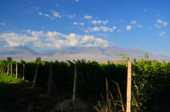 Khor Virap, Armenia (phudd23) Tags: khorvirap armenia ararat mountararat vineyard