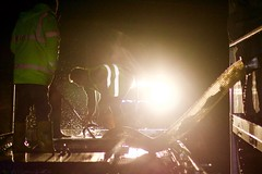 Trout (MigKenzie Photos) Tags: trout fish jumping fishfarm farm job work dark night late shift leap lights splash silhouette strawb jump lorry trailer live transport