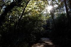 hourtin (bijoubijoufr) Tags: gironde lake hourtin autumn