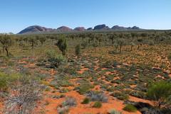 Desert life (LeelooDallas) Tags: australia northern territory flower blossom tree bush ayers rock uluru yulara landscape dana iwachow fuji finepix hs20 exr olgas kata tjuta longitude 131