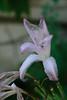 20160924_Cinq_Sens_Yvoire (4 sur 13) (calace74) Tags: rhonealpes hautesavoie nature fleurs macro jardinsdes5sens yvoire