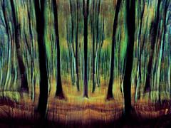 P3910833f_edited-1aa il bosco incantato !! (gpaolini50) Tags: emotive esplora explore explored emozioni explora photoaday photography photographis photographic photo phothograpia bosco immagini dinamicita