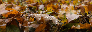 Autumn Raindrops, Netherlands