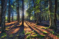 Into The Woods, 2016.11.07 (Aaron Glenn Campbell) Tags: mannygordonrecreationsite thornhursttownship lackawannastateforest lackawannacounty nepa pennsylvania autumn fall leaves foliage backlit backlighting sunlight shadows shade outdoors optoutside meetthemoment 3xp 2ev hdr macphun aurorahdr2017 sony a6000 a6k ilce6000 sonyalpha6000 mirrorless rokinon 12mmf2edasifncs wideangle primelens manualfocus emount
