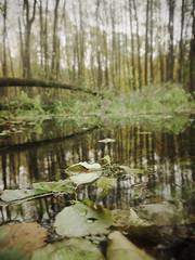 reflection (Darek Drapala) Tags: water waterscape nature reflection reflects forest trees tree wild lumix light panasonic poland polska panasonicg5