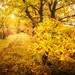 Un chemin d'or et de lumière
