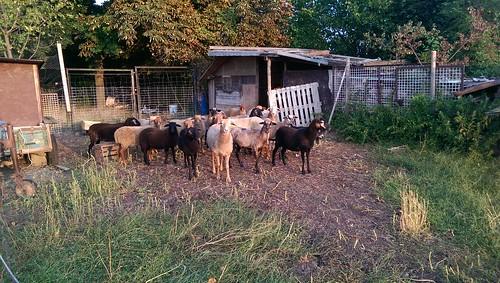 Die Herde grüßt
