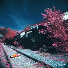 Me caigo muerta (santisss) Tags: color 120 film me 50mm kodak cx hasselblad infrared medium format expired cf 503 muerta fle canfranc distagon eir caigo aerochrome