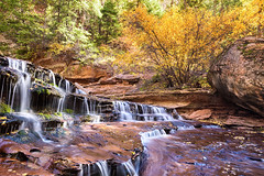 Autumn in Zion (brianbaril_photography) Tags: park travel autumn vacation usa southwest color fall water beautiful leaves yellow rock stone river subway landscape utah waterfall leaf ut nikon canyon national zion nikkor d800 the brianbaril