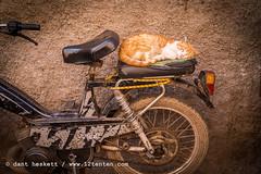 12tenten_Marrakech_0003 (12tenten) Tags: carriage morocco berber maroc marrakech souk medina camels snakecharmer riad jardinmajorelle veronicamatilda