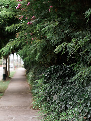 (Josh Meek) Tags: trees plants plant nature canon 50mm bokeh overcast foliage sidewalk greens 50mm18 niftyfifty fuji400h mastinlabs