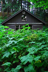 Lake Superior Cabin 2 (dcclark) Tags: statepark up cabin outdoor michigan upperpeninsula thimbleberry porcupinemountains thimbleberries porkies