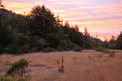 Meadow Sunset (J-Fish) Tags: california sunset meadow redwoods sanbornpark d300s 1685mmf3556gvr 1685mmvr