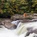 ohiopyle falls 07