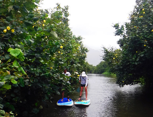 2015 Kauai Paddle Adventure  (93)