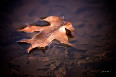 Leaf on Water ~ Huron River (j van cise photos) Tags: autumn fall nature water river michigan huronriver float decline huron