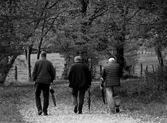 Triumvirat mit Schirmen - Triumvirate with Umbrellas (GuteFee) Tags: autumn men blackwhite herbst umbrellas mnner schirme