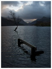 December 4th- Take 2 (peterdouglas1) Tags: trees llanberis benches llynpadarn thattree