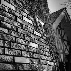 A brick wall in light (Leiroha) Tags: bw 120 6x6 blackwhite planar selfdeveloping rolleiflex35fplanar planar75mmf35 elfordfp4