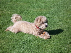 ready-for-play--chesney-is-one-of-kenzie-and-chewys-toy-f1b-girls-_4697993585_o