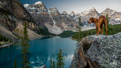Moraine Lake Dog Portrait (anoopbrar) Tags: trees sunset portrait panorama dog lake canada mountains reflection water sunrise landscape photography turquoise scenic surreal alberta valley banff colourful peaks moraine banffnationalpark morainelake valleyofthetenpeaks tenpeaks anoopbrar