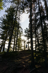 Tunnel Mtn - Lost in the Trees (Shane Kiely) Tags: banff canada lakeminnewanka tunnelmountain vermillionlakes