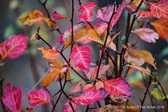 Just a Bush (jimgspokane) Tags: autumn fall turnbullwildliferefuge washingtonstate nikonflickraward naturewatcher todaysbest otw