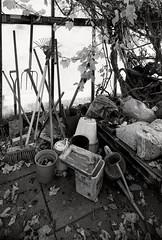 Glasshouse Interior 1 B&W (CactusD) Tags: greenhouse glasshouse horticulture gardening landscape england nikon d800e fx texture uk unitedkingdom gb 24mmf35pce 24pce 24mm f35 pce tiltshift blackandwhite bw monochrome tilt shift