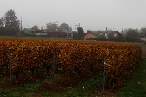 BB-26192 dans les vignes
