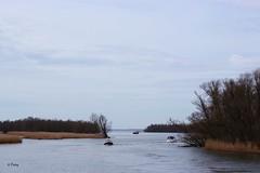"""Drimmelen: National Park """"De Biesbosch"""" ( Corry ) Tags: nationalpark biesbosch waterworld nature boats"""