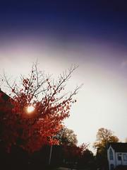 Eine Herbstszene (txchris86) Tags: eineherbstszene filter autumnszenery herbst herbstszene autumn tree treetop street buildings strasse huser blurry edited day tagsber colors farben sunny sonnig