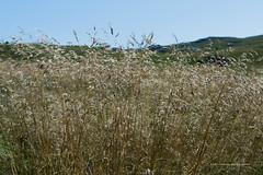_DSC9636 (Boréalis91) Tags: fontdurles macrofamille vercors marmots voielactã©e