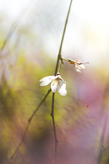 Weeping Blossoms (twomeows (away...)) Tags: cherryblossom flower spring garden pink macro floral bokeh