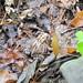0733 Buttermilk Falls State Park