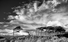 Lone Wolf (cotswoldman) Tags: forest formby formbypoint crosby beach liverpool merseyside mersey mono monochrome blackandwhite blancoynegro blancetnoir noiretblanc landscape trees tree wood copse gloucestercameraclub skyscape sky cloudscape clouds