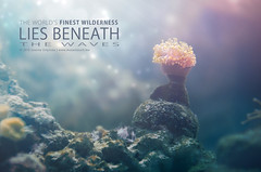 Wilderness beneath the waves 3 (MusesTouch - digiArt & design) Tags: wildernessbeneaththewaves underwaterphotography oceanflora anemone zoozurichaquarium nikond7000 musestouch magical underwaterquotes