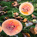 """2016_10_31_Champignons-60 • <a style=""""font-size:0.8em;"""" href=""""http://www.flickr.com/photos/100070713@N08/30576985922/"""" target=""""_blank"""">View on Flickr</a>"""