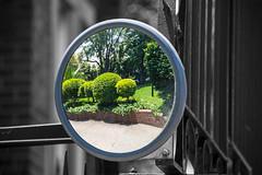 garden (Greg Rohan) Tags: circle round d7200 2016 photography garden green plants mirror