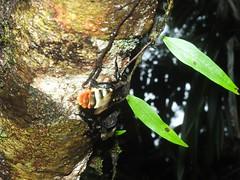 apidae_julio-16_03 (Reinaldo Aguilar) Tags: apidae abejas