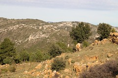 Wandern_etc (5) (Ernst Kuzorra) Tags: calig peniscola spain goat capricorn fire