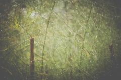 Broken Fences (jm atkinson) Tags: hff fence friday rain garden drops dew nottheoriginal