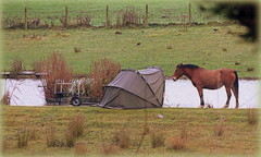 Carry on Camping!  (Lol) (Deida 1) Tags: horse tent camping fishingpool november uk staffordshire field carryoncamping