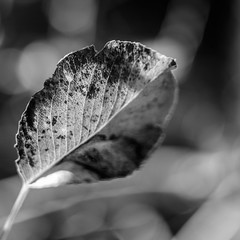 Catharsis (jamesgriffithsphotography) Tags: bokeh leaf leaves fall autumn closeup beauty beautiful catharsis cathartic moody symmetry symmetrical