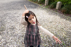 Quirky (Wunkai) Tags: mitoshi ibarakiken japan  ziyiwang   sakura   sannomaru petals