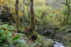 puente sobre el ro (missemeyas) Tags: cascada otoo bosque puentes musgo nikon d3200 asturias agua humedad setas colores