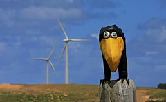 Codrington Wind Farm : Crow with yellow beak . . . (Clement Tang **catching up**) Tags: codringtonwindfarm travel bluesky victoria crowwithyellowbeak birdsculpture crowsculpture nationalgeographic windturbines concordians closetonature portland scenicsnotjustlandscapes spring woodsculpture nature cleanenergy environmentalenergy landscape windenergy windpower