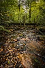 Taunus Hohe Mark 1 (JTPhotography) Tags: taunus nature water wild hessen frankfurt forrest panasoniclumixg6 longtermexposure olympus918mm panasonic1445mm trees river bridge