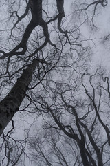Look at the mist_IMG1999 (YASSAAN) Tags:     pentax k1 japan mountain climbing fa31